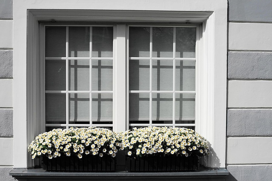 Window decoration | ZEISS CY PLANAR 50 F1.4 <br> Click image for more details, Click <b>X</b> on top right of image to close