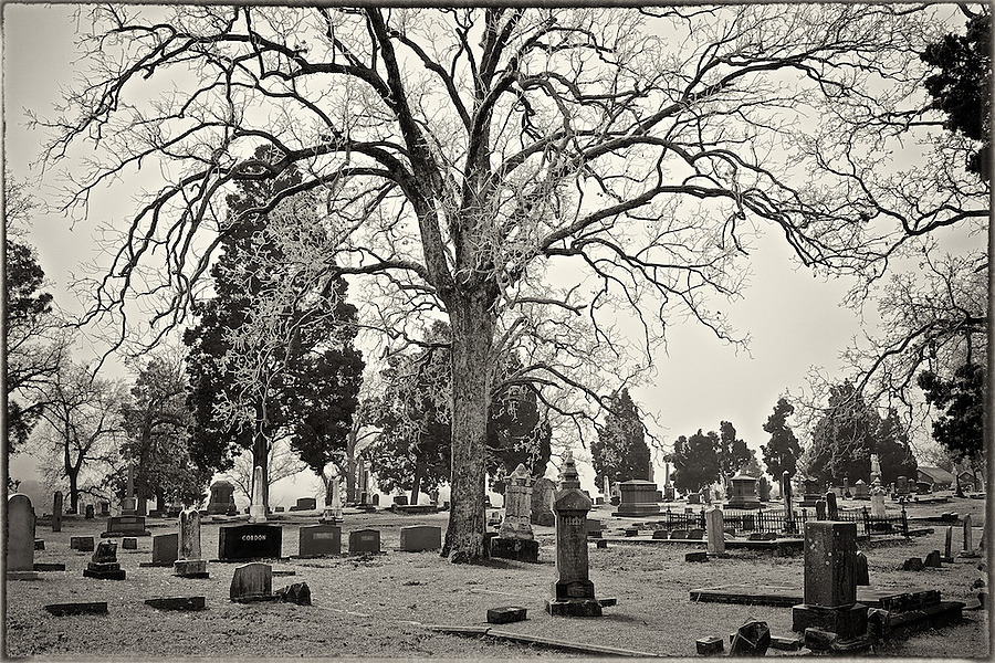 Winter - Oak Cemetery | ZEISS FE 35MM F2.8 ZA <br> Click image for more details, Click <b>X</b> on top right of image to close