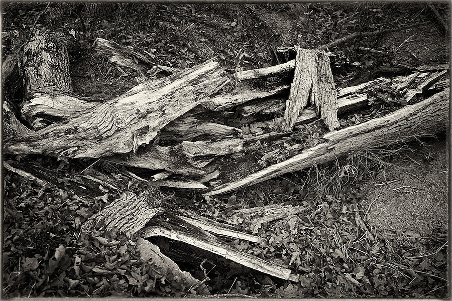 Fallen Tree | ZEISS FE 35MM F2.8 ZA <br> Click image for more details, Click <b>X</b> on top right of image to close