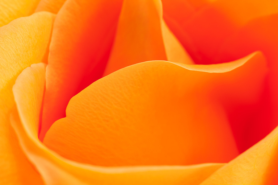 Orange Swirl | ZEISS CY MAKRO-PLANAR 60MM F2.8 <br> Click image for more details, Click <b>X</b> on top right of image to close