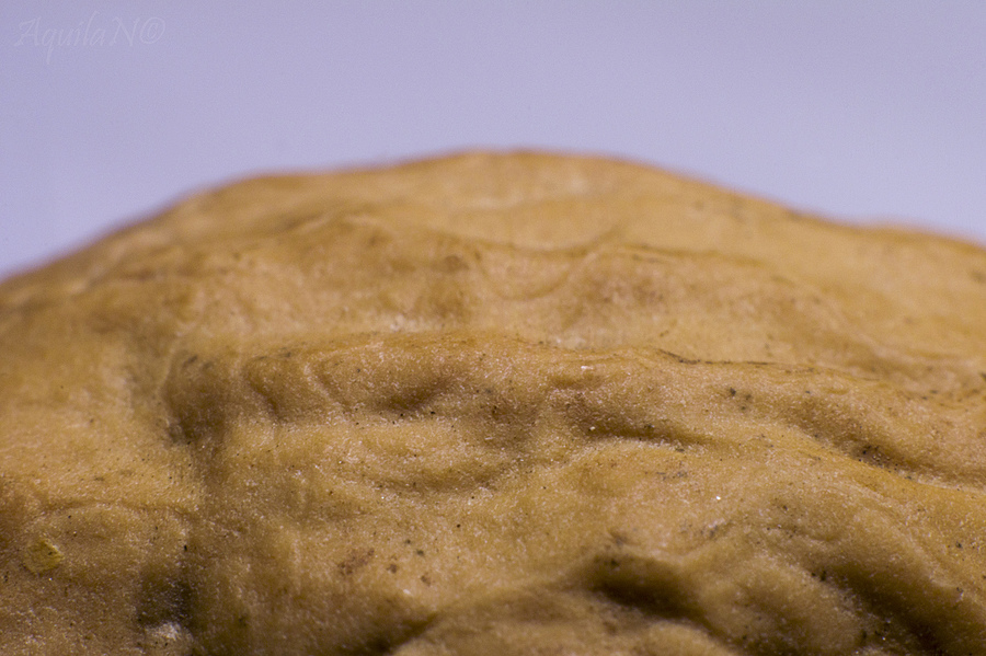 Walnut Near Surface | LENS MODEL NOT SET <br> Click image for more details, Click <b>X</b> on top right of image to close