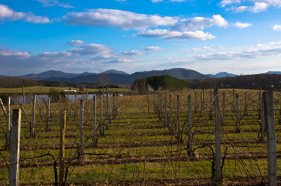 Afton Mountain Vineyards | ZEISS ZA VARIO-SONNAR DT F3.5-F4.5 16-80MM <br> Click image for more details, Click <b>X</b> on top right of image to close