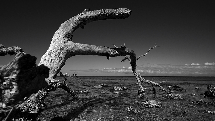 sea serpent | ZEISS DISTAGON F3.5 18MM <br> Click image for more details, Click <b>X</b> on top right of image to close