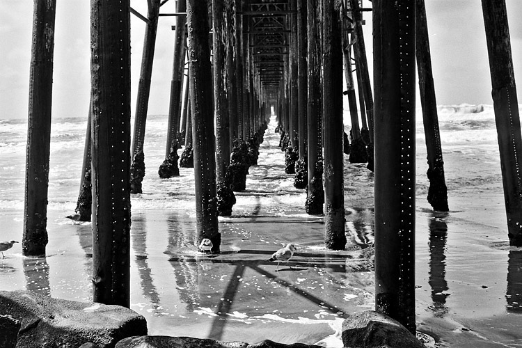 Birds Under the Pier | LENS MODEL NOT SET <br> Click image for more details, Click <b>X</b> on top right of image to close