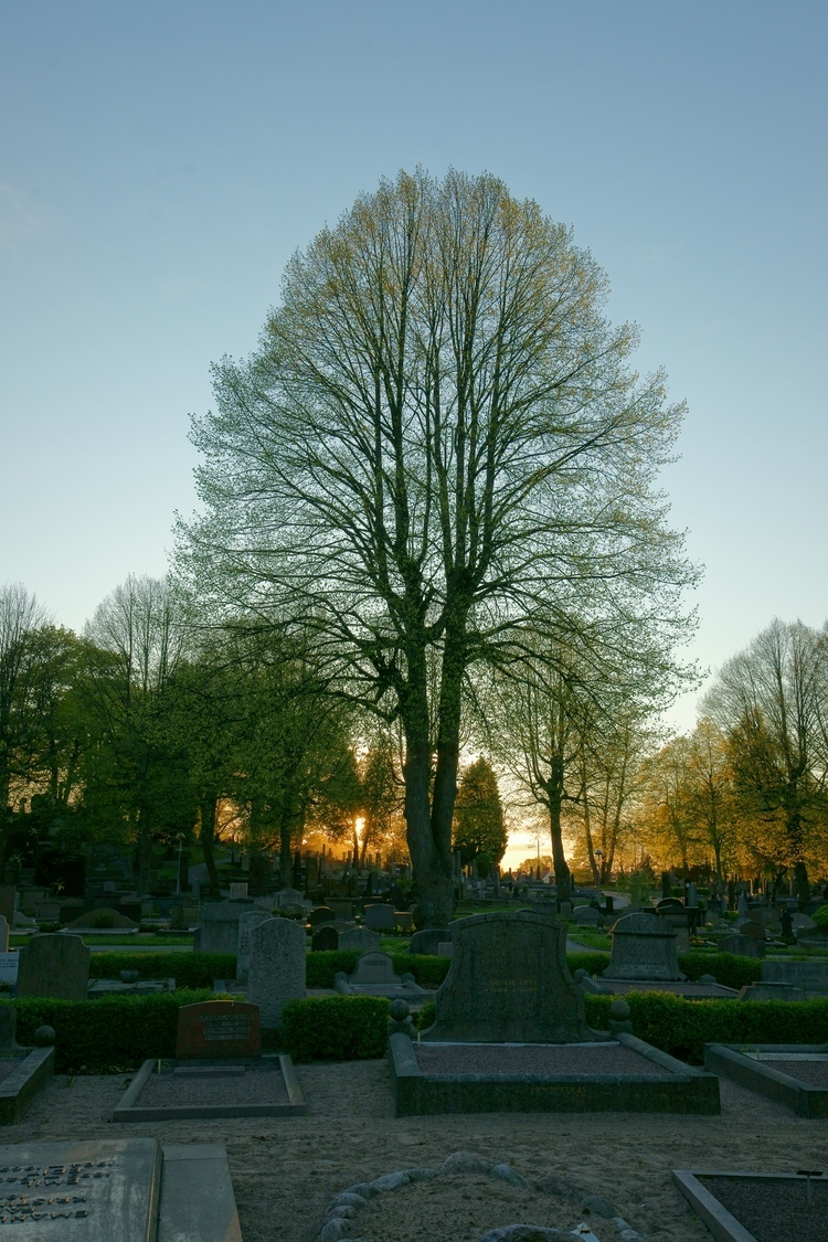 End of life, end of day... | ZEISS ZA VARIO-SONNAR F2.8 16–35MM <br> Click image for more details, Click <b>X</b> on top right of image to close