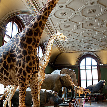 Natural History Museum Vienna | ZEISS DISTAGON F2 28MM <br> Click image for more details, Click <b>X</b> on top right of image to close