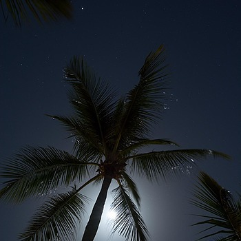 The moon, some stars and a palm tree | ZEISS DISTAGON F2.8 21MM <br> Click image for more details, Click <b>X</b> on top right of image to close
