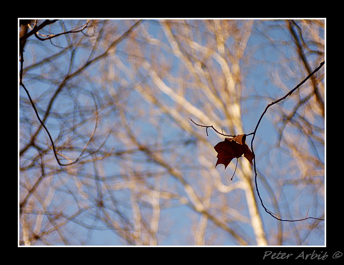 Lone Leaf | ZEISS ZM C SONNAR F1.5 50MM <br> Click image for more details, Click <b>X</b> on top right of image to close