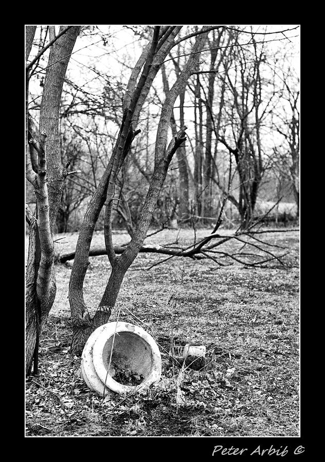 Abandoned Pot | ZEISS ZM C SONNAR F1.5 50MM <br> Click image for more details, Click <b>X</b> on top right of image to close
