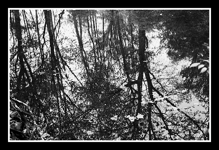 Reflection | ZEISS ZM C SONNAR F1.5 50MM <br> Click image for more details, Click <b>X</b> on top right of image to close