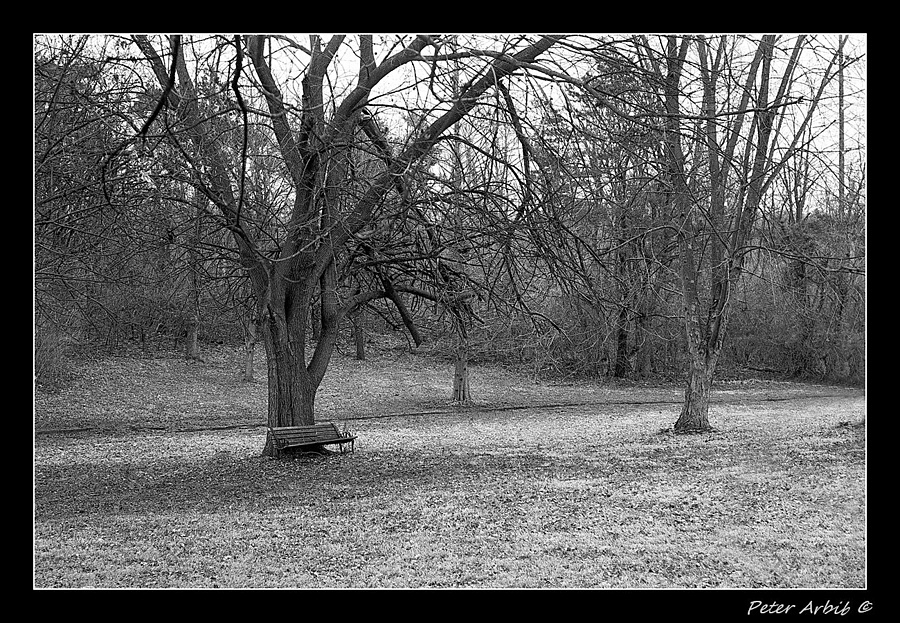 Abandoned Bench | ZEISS ZM C SONNAR F1.5 50MM <br> Click image for more details, Click <b>X</b> on top right of image to close