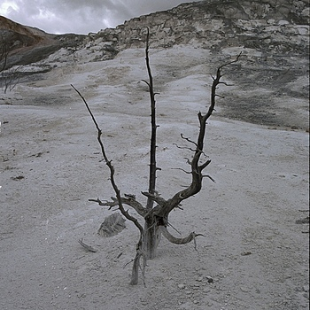 Lone Tree, Mammoth Hot Springs | ZEISS ZM BIOGON F2.0 35MM <br> Click image for more details, Click <b>X</b> on top right of image to close