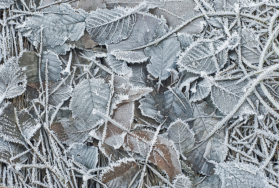 Jack Frost | ZEISS PLANAR F1.4 50MM <br> Click image for more details, Click <b>X</b> on top right of image to close