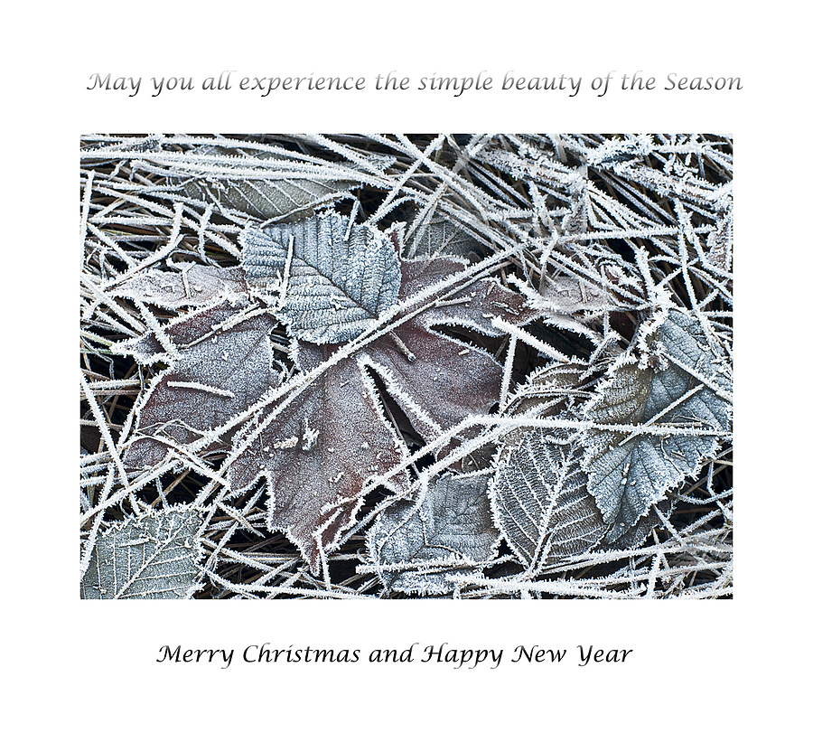 Season's Greetings | ZEISS PLANAR F1.4 50MM <br> Click image for more details, Click <b>X</b> on top right of image to close