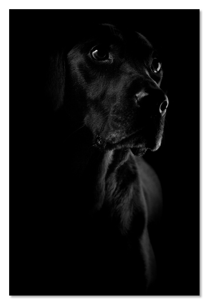 Dog Vader | ZEISS PLANAR F1.4 50MM <br> Click image for more details, Click <b>X</b> on top right of image to close