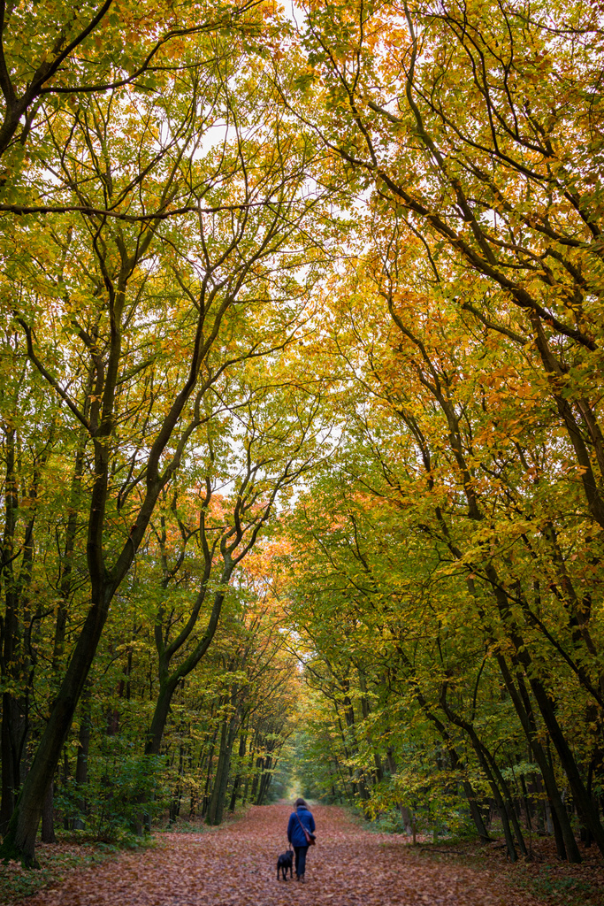 Autumn walk | ZEISS ZEISS SONNAR 35MM F2 <br> Click image for more details, Click <b>X</b> on top right of image to close