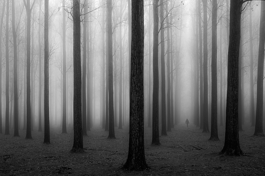 In a fog | ZEISS ZEISS SONNAR 35MM F2 <br> Click image for more details, Click <b>X</b> on top right of image to close