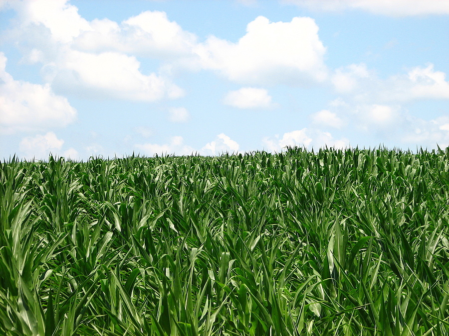 Corn fields of Iowa | LENS MODEL NOT SET <br> Click image for more details, Click <b>X</b> on top right of image to close
