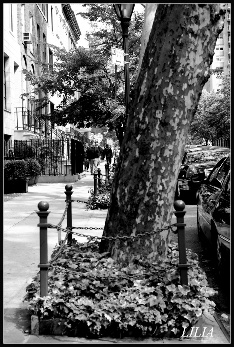nyc street | LENS MODEL NOT SET <br> Click image for more details, Click <b>X</b> on top right of image to close