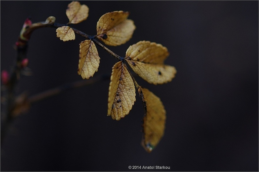 Sprig. | ZEISS MAKRO PLANAR F2.0 100MM <br> Click image for more details, Click <b>X</b> on top right of image to close