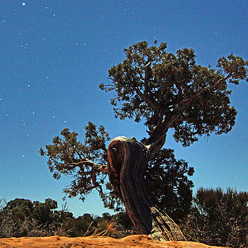 Juniper And Stars | LENS MODEL NOT SET <br> Click image for more details, Click <b>X</b> on top right of image to close