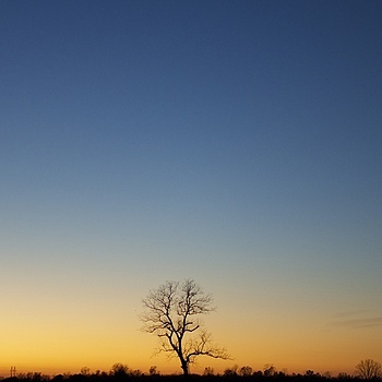 Late day Oak | ZEISS DISTAGON F1.4 35MM <br> Click image for more details, Click <b>X</b> on top right of image to close