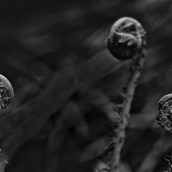 Ferns in conversation | ZEISS MAKRO PLANAR F2.0 100MM
