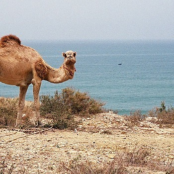 Camel | ZEISS G PLANAR 45MM F2 <br> Click image for more details, Click <b>X</b> on top right of image to close