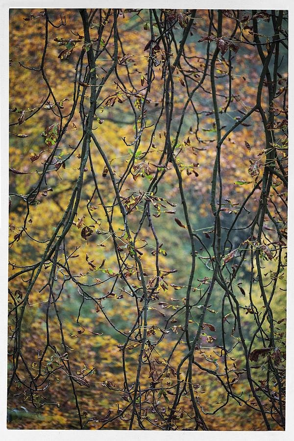 October mood | LENS MODEL NOT SET <br> Click image for more details, Click <b>X</b> on top right of image to close