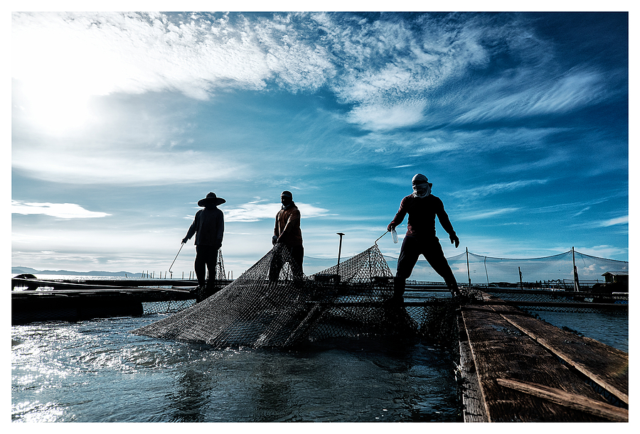 Aquaculture, Penang, Malaysia | ZEISS TOUIT F2.8 12MM <br> Click image for more details, Click <b>X</b> on top right of image to close