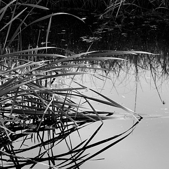 Still Waters | ZEISS SL66 PLANAR 80MM F2.8 <br> Click image for more details, Click <b>X</b> on top right of image to close