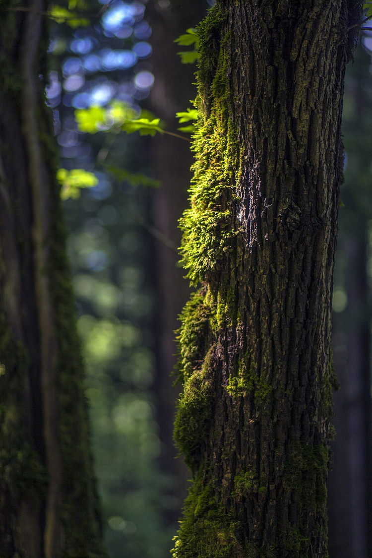 Trees and moss | ZEISS PLANAR F1.4 85MM <br> Click image for more details, Click <b>X</b> on top right of image to close