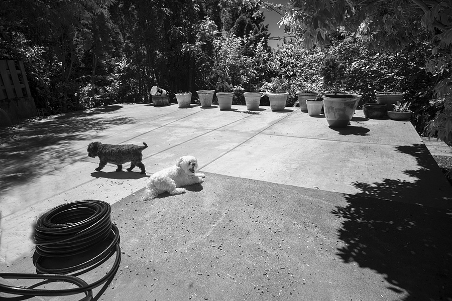Dogs on the patio | ZEISS G BIOGON 21MM F2.8 <br> Click image for more details, Click <b>X</b> on top right of image to close