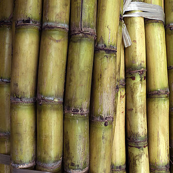 Sugarcane Guangdong Province China | ZEISS DISTAGON F1.4 35MM <br> Click image for more details, Click <b>X</b> on top right of image to close