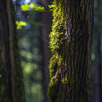 Trees and moss | ZEISS PLANAR F1.4 85MM