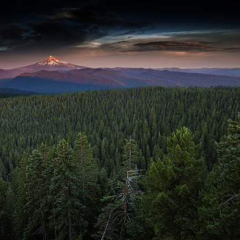 Mt. Hood and forest | ZEISS DISTAGON F2.8 21MM