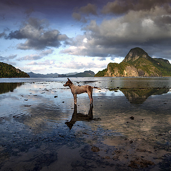 Beach Dog El Nido