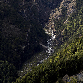 Khumbu Valley forest | ZEISS G BIOGON 28MM F2.8 <br> Click image for more details, Click <b>X</b> on top right of image to close
