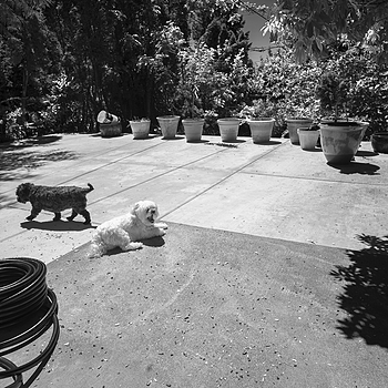 Dogs on the patio | ZEISS G BIOGON 21MM F2.8