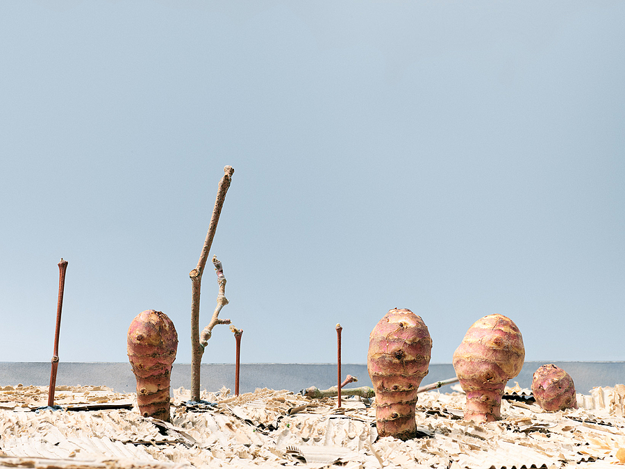 Tubers at the beach | LENS MODEL NOT SET <br> Click image for more details, Click <b>X</b> on top right of image to close