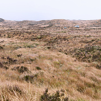 Bog outside Glen Coe | LENS MODEL NOT SET <br> Click image for more details, Click <b>X</b> on top right of image to close