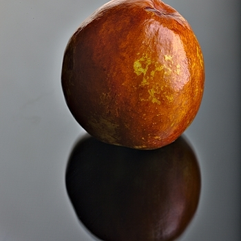 Jujube | ZEISS MAKRO PLANAR F2.0 100MM <br> Click image for more details, Click <b>X</b> on top right of image to close
