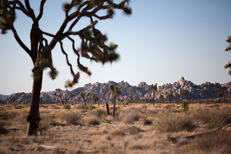 Joshua Tree Rocks | ZEISS APO SONNAR F2 135MM <br> Click image for more details, Click <b>X</b> on top right of image to close
