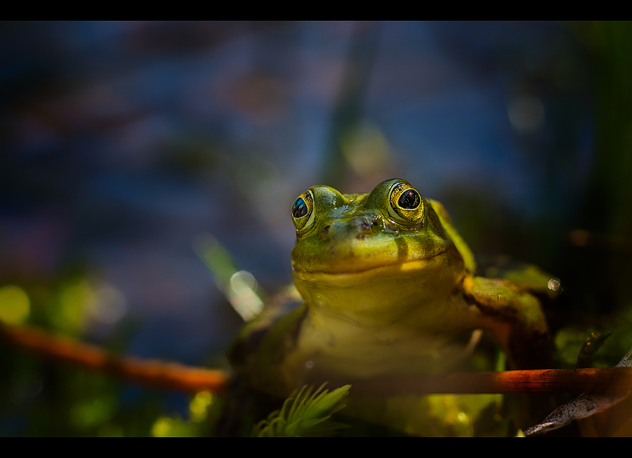 Poolfrog | ZEISS MAKRO PLANAR F2.0 100MM <br> Click image for more details, Click <b>X</b> on top right of image to close