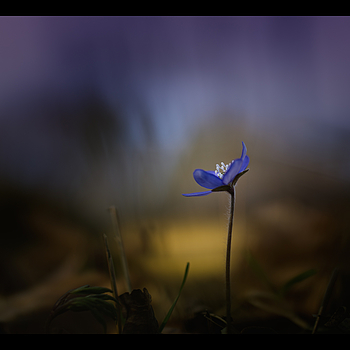 The flower | ZEISS ZEISS SONNAR 35MM F2 <br> Click image for more details, Click <b>X</b> on top right of image to close