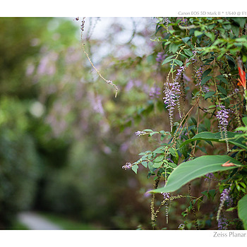 Photo - 41503 | ZEISS PLANAR F1.4 85MM