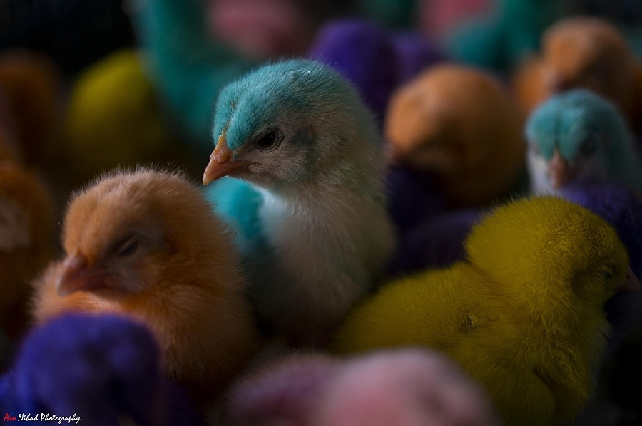 Chick World | ZEISS TOUIT F1.8 32MM <br> Click image for more details, Click <b>X</b> on top right of image to close