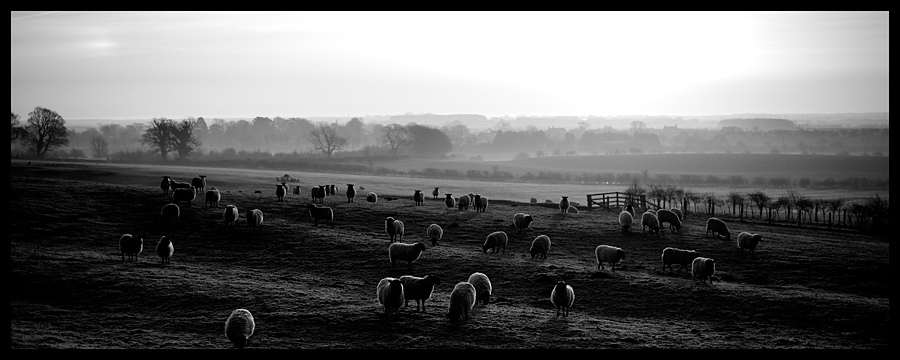 Mint Sauce | ZEISS PLANAR F1.4 50MM <br> Click image for more details, Click <b>X</b> on top right of image to close
