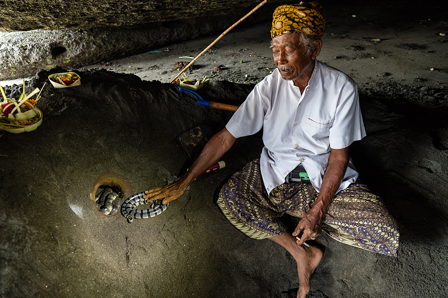 Snake Charming | ZEISS DISTAGON F2.8 21MM <br> Click image for more details, Click <b>X</b> on top right of image to close