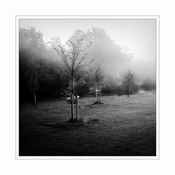 Trees in Fog | ZEISS ZM BIOGON F2.8 25MM <br> Click image for more details, Click <b>X</b> on top right of image to close